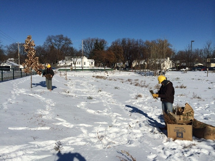 Conservation Corps dispersing native seed directly into a freshly fallen snow at a Metro Blooms managed public school raingarden